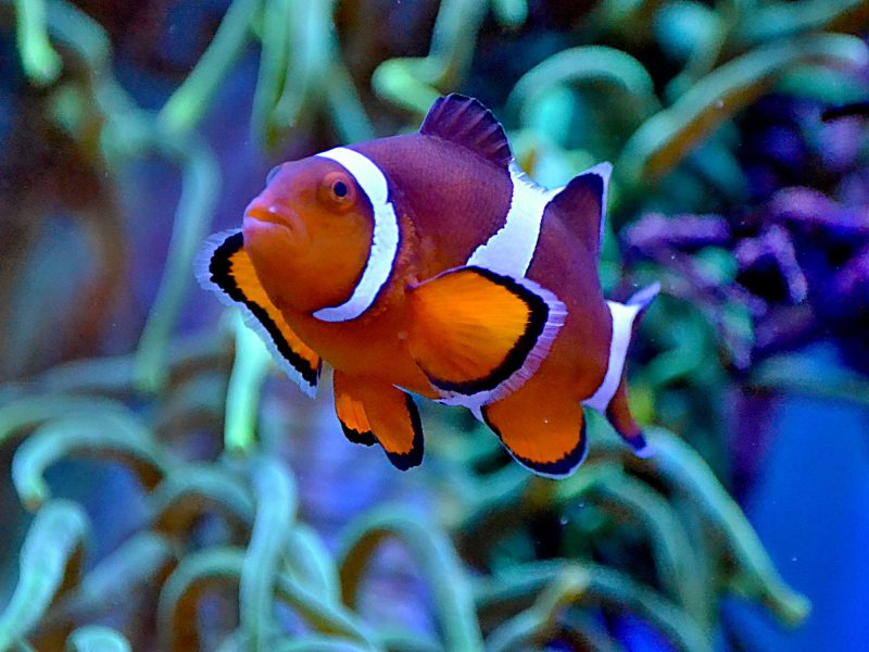 Best Saltwater Fish For Beginners