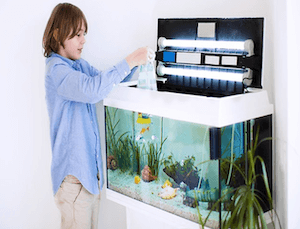 Best Freshwater Fish for Cycling Tank