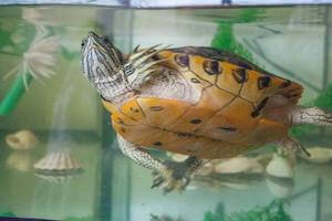 Can I add Fish to my Turtle Tank?