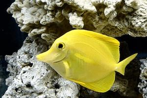 Best Algae Eating Saltwater Fish