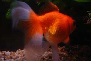 What Causes Bloating in Fish?