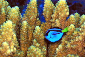 Best Reef Safe Fish