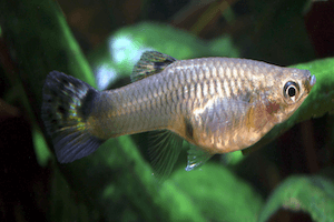 The Best Fish for a Fish Tank